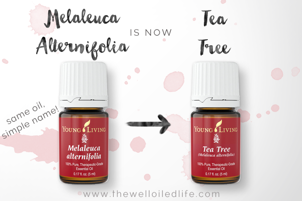 Young Living Melaleuca Alternifolia is now Tea Tree
