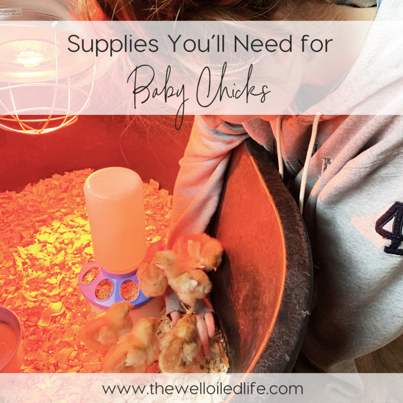 Supplies You'll Need for Baby Chicks